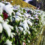 雪が積もった名古屋