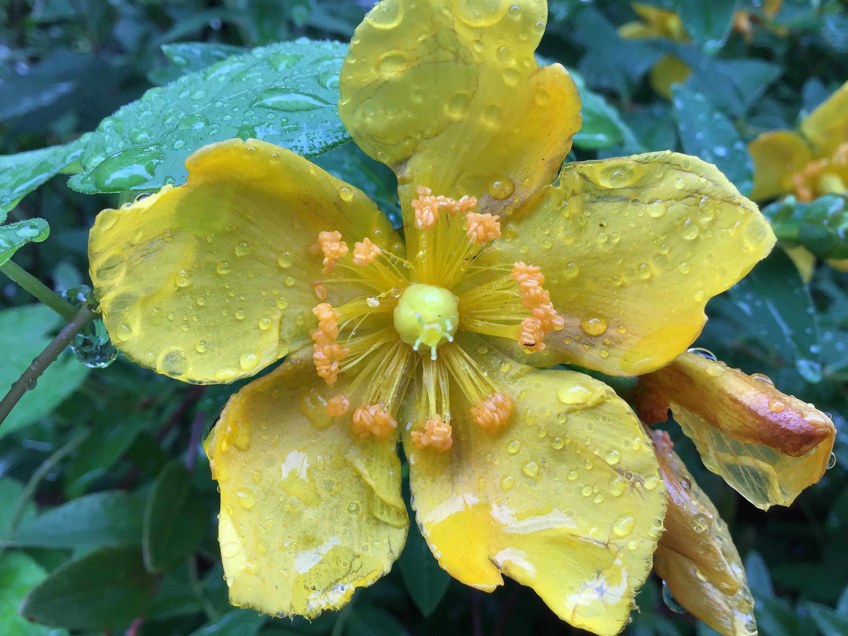 花のアップ